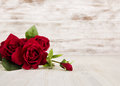 Rose flowers, red on wooden grunge background, floral card Royalty Free Stock Photo