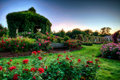 Stock Photo Rose Garden