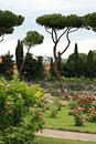 Rose garden beautiful in rome italy Royalty Free Stock Photo