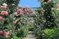 Rose garden flower arcade Royalty Free Stock Photo
