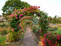 Rose garden formal with arching trellises Royalty Free Stock Photo