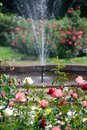 Rose garden and fountain in background Royalty Free Stock Images