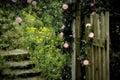 Rose Garden Royalty Free Stock Photo