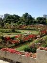 Rose garden located in Valladolid, Castilla y Leon, Spain