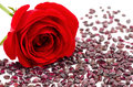 Rose and garnet Stock Images