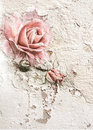 Rose on grunge wall background texture Royalty Free Stock Photo
