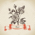 Rose hand drawn vintage design Stock Image