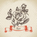 Rose hand drawn vintage design Stock Photos