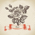 Rose hand drawn vintage design Stock Photography