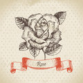 Rose hand drawn vintage design Royalty Free Stock Images