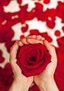 Rose In Hands;