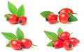 rose hip berry with leaf isolated on white background. Set or co