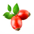 Rose hip isolated on a white background Stock Images