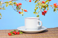Rose-hips branch and tea outdoor Royalty Free Stock Images