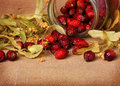 Rose hips and linden blossom Royalty Free Stock Photo