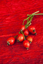 Rose hips on red background Stock Photos
