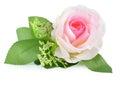 Rose insulated on white background fabrics Royalty Free Stock Images