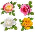 Rose isolated on white Royalty Free Stock Photo
