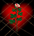 Rose and lattice Royalty Free Stock Images