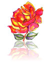 Rose and leaves with reflection watercolor vibrant colored stem painting Stock Photos