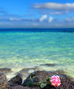 Rose lies on stones the the sea background Stock Photos