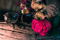 Rose of love flower still life Stock Image