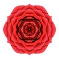 Rose mandala flower kaleidoscopic isolated rossa su bianco Fotografia Stock Libera da Diritti