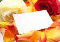 Rose and message on a petals. Background Stock Photo