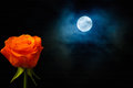 Rose and moon orange dramatic clouds with full with texture on background Royalty Free Stock Image