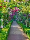 Rose passage Royalty Free Stock Photo