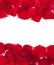 Rose petal frame red on white Royalty Free Stock Image