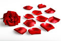 Rose petal Royalty Free Stock Photo