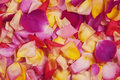Rose petals. Abstract floral background. Stock Photography