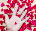 Rose Petals Border and hand on a wooden Royalty Free Stock Photo