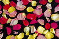 Rose petals carpet Royalty Free Stock Photo