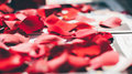Rose petals close up