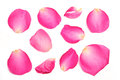 Rose petals a collection of pink on a white background Stock Photography