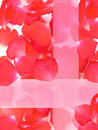 Rose  petals  flower Stock Image