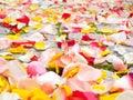 Rose petals on garden stones