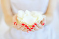 Rose petals in hands Royalty Free Stock Photo