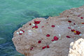 Rose petals next to the sea on a rock at waters edge Stock Images