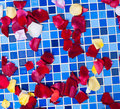 Rose petals on a tile mosaic Stock Photos