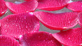 Rose petals in water clsoe up of Royalty Free Stock Photos