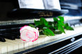 Rose and piano Royalty Free Stock Photography