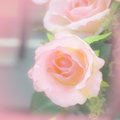 Rose pink with soft light and shallow focus Stock Photography