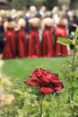Rose and red dresses Stock Photo