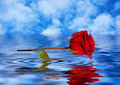 Rose reflected in water Stock Images