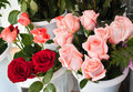 Rose for retail trade Royalty Free Stock Photo