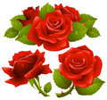 Rose rosse impostate Immagine Stock