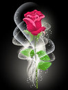 Rose and smoke on the black background Royalty Free Stock Photo